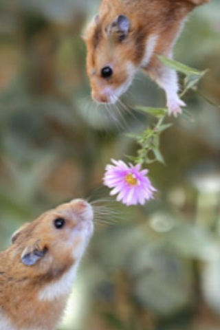 Common Mistakes With Hamster Care The Hamster Hut